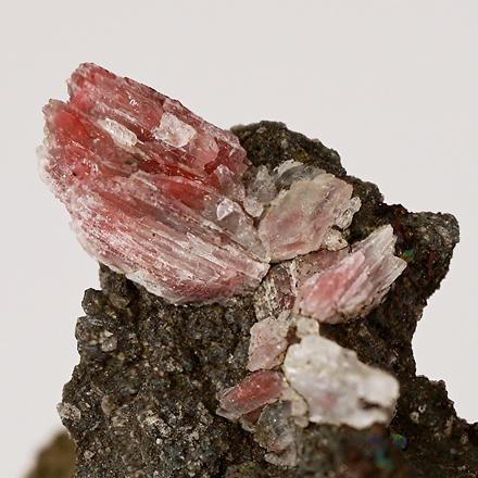 灰長石 Anorthite 鉱物たちの庭